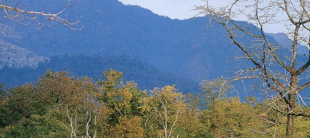 forest-of-manas