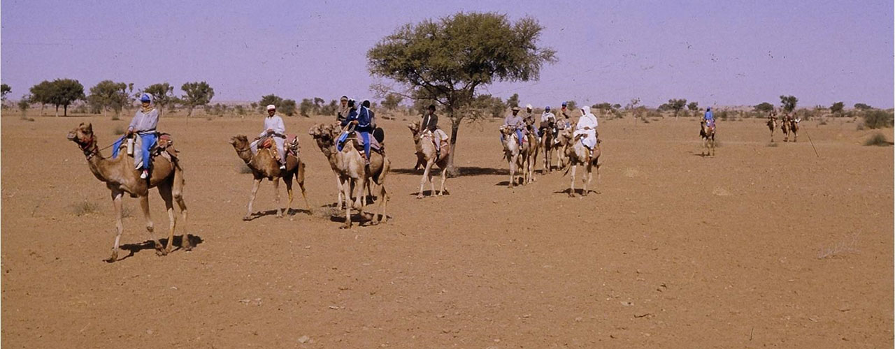 Camel Safaris Tour - Ibex Expeditions