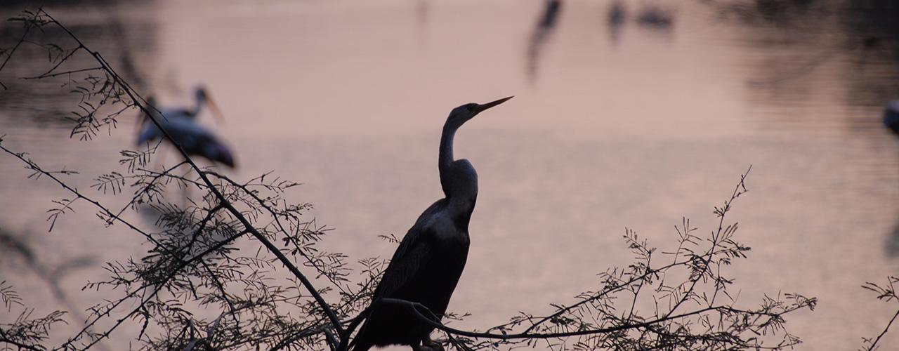 Bharatpur Bird Sanctuary Safari Trip - Ibex Expeditions