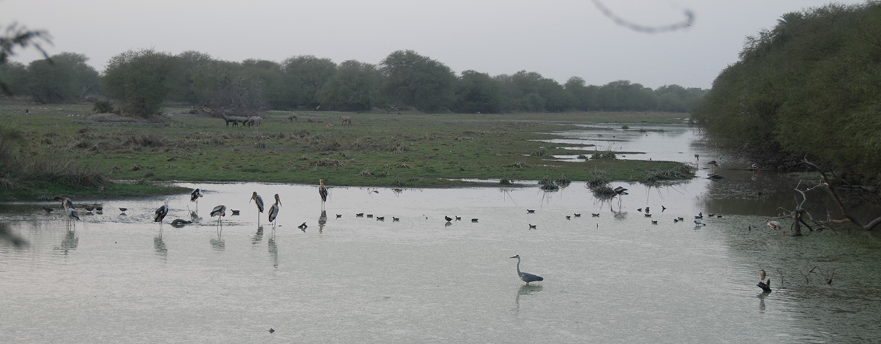 Bharatpur Bird Sanctuary Safari Travel - Ibex Expeditions