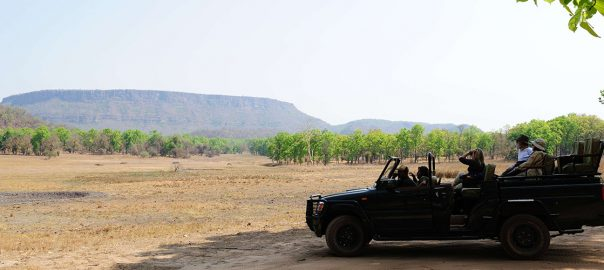 Bandhavgarh National Park Safari Travel - Ibex Expeditions