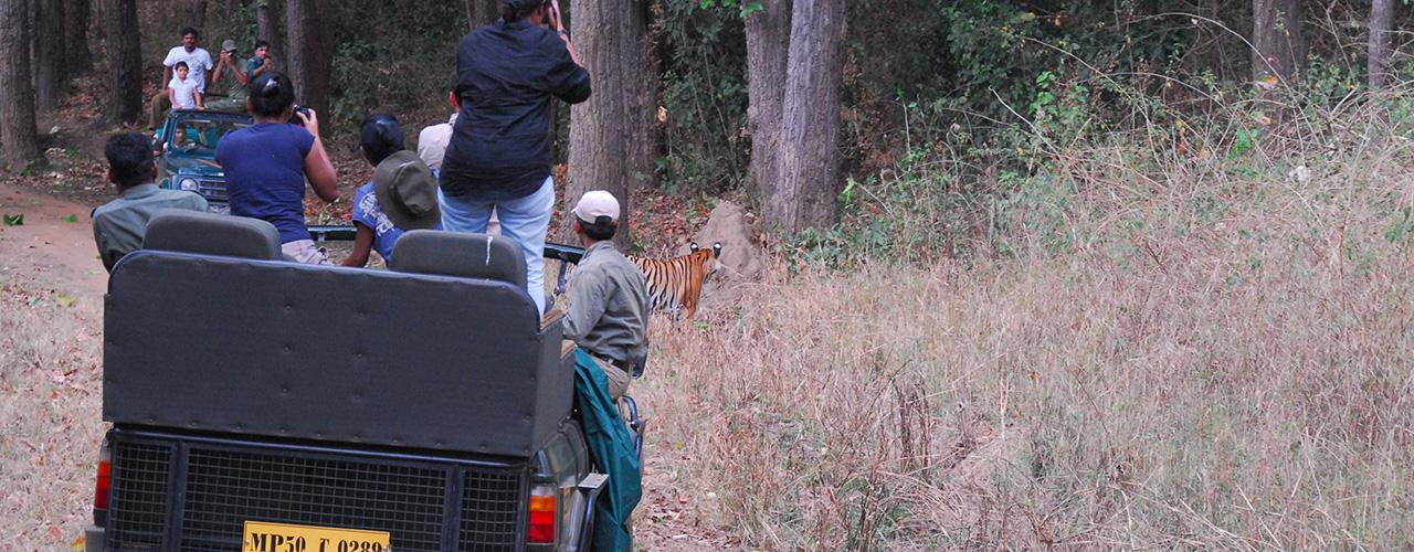 Kanha National Park Tour - Ibex Expeditions