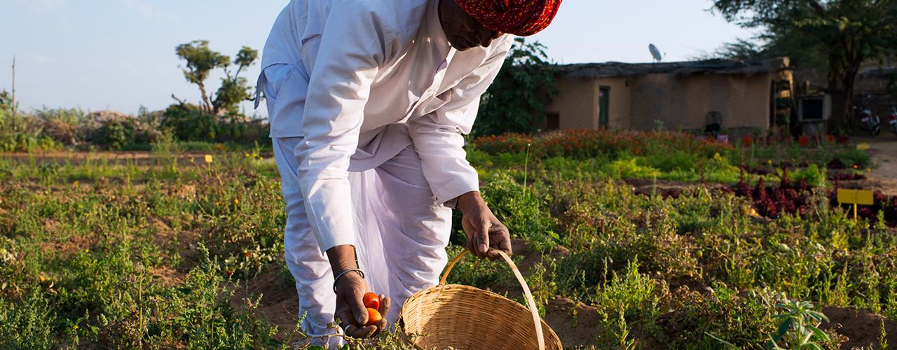 Organic Farming at Lakshman Sagar - Ibex Expeditions