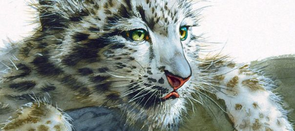 Snow Leopard - Ibex Expeditions
