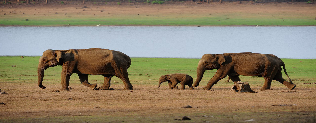 Nagarhole National Park and Periyar Tiger Reserve Trips- Ibex Expeditions