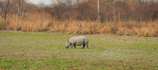 Kaziranga National Park Safari Travel - Ibex Expeditions