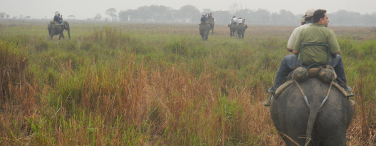 Kaziranga National Park Safari Tours - Ibex Expeditions