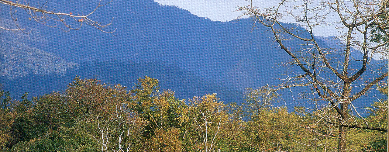 Forest Of Manas - Ibex Expeditions