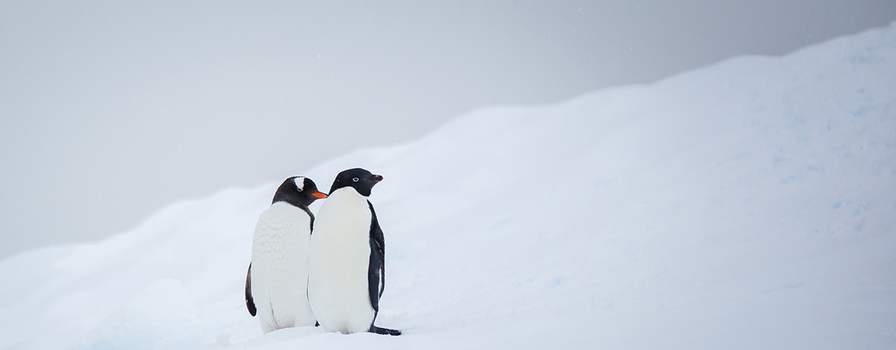 Antarctica Tours - Ibex Expeditions