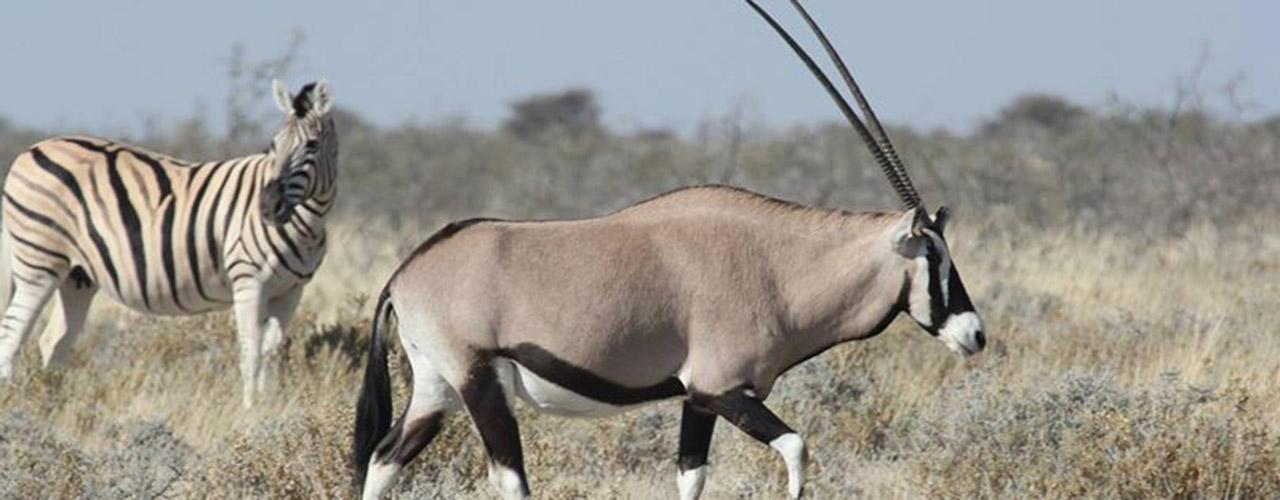 Namibia Safari Vacation - Ibex Expeditions