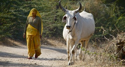 Rajasthan Tours - Ibex Expeditions